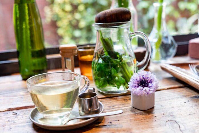 Plantas medicinais: como usar, quais benefícios e as mais comuns em Santa Catarina | NSC Total